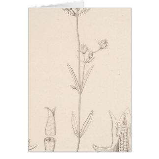 XXI Halenia rothrockii Greeting Card