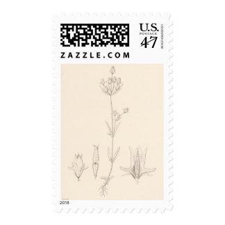 XXI Halenia rothrockii Postage