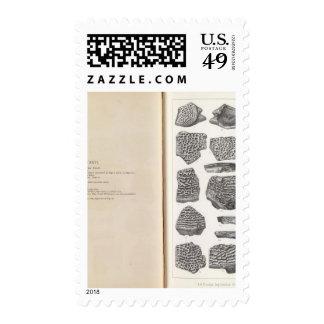 XXVI Trionyx Postage Stamp
