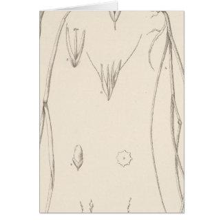 XXVII Trisetum, Vilfa Card