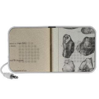 XXXVII Oxyaena, Creodus Laptop Speaker