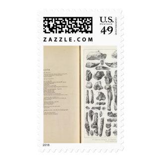 XXXVII Oxyaena, Creodus Postage Stamps