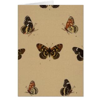 XXXVII Synchloe, Melitaea Greeting Card