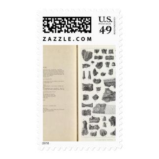 XXXVIII Stypolophus Postage Stamp