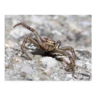 Xysticus cristatus (crab spider) postcard