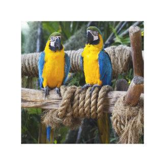 Y amarillo lona envuelta Macaw azul Impresiones En Lona Estiradas