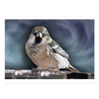 Y su pájaro puede cantar tarjetas postales