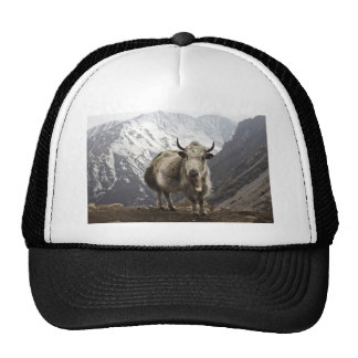 Yacs en Nepal Gorros