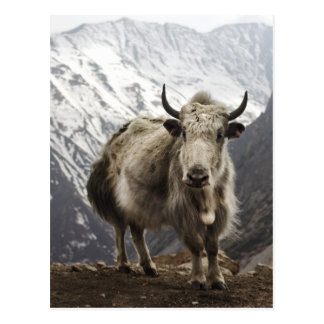 Yacs en Nepal Postal