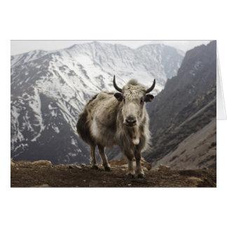Yacs en Nepal Tarjeta Pequeña