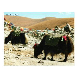 Yacs Himalayan de la postal