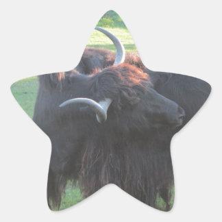 Yacs Pegatina En Forma De Estrella