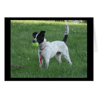 Yahtzee The Dog with Ball Greeting Card