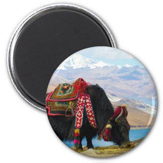 Yak Bos Grunniens near Yamdrok lake Tibet 2 Inch Round Magnet