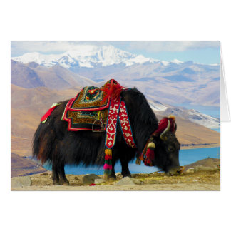 Yak Bos Grunniens near Yamdrok lake Tibet Greeting Card