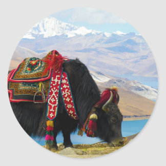 Yak Bos Grunniens near Yamdrok lake Tibet Classic Round Sticker