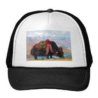 Yak Bos Grunniens near Yamdrok lake Tibet Trucker Hat