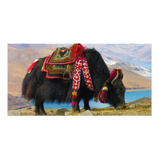 Yak Bos Grunniens near Yamdrok lake Tibet Photo Greeting Card