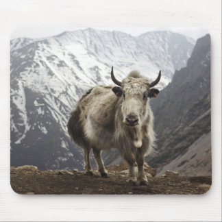 Yak in Nepal Mouse Pad