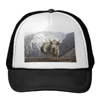 Yak in Nepal Trucker Hat