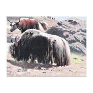 Yaks Vintage Painting Canvas Print