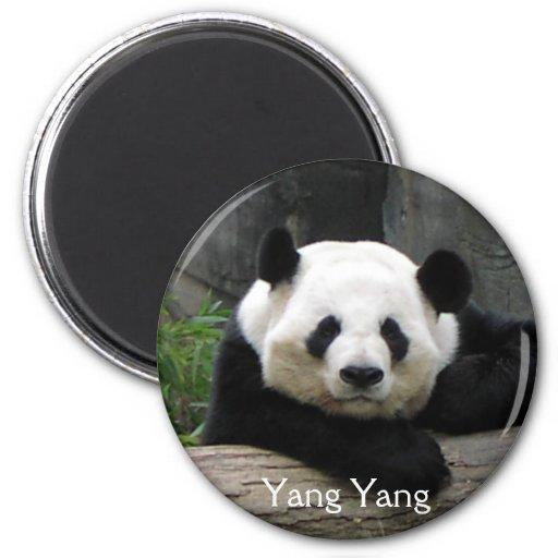 Yang Yang Panda Magnet
