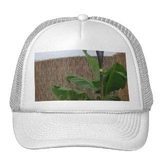 Yarda tropical gorras