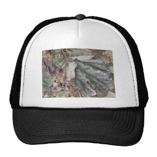 Yashiro Japanese Garden s Frost Covered Leaves Mesh Hat