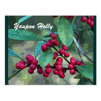 Yaupon Holly Postcard