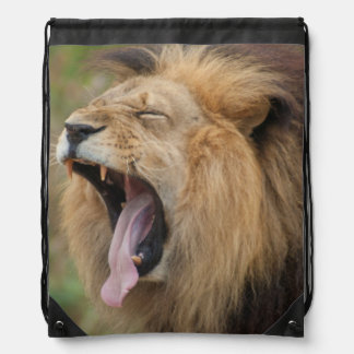 Yawning African Lion Male with Wide Yawning Fangs Drawstring Bag