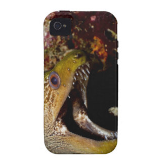 Yawning and intimidating mouth of a Yellowmargin iPhone 4/4S Case