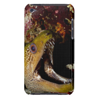Yawning and intimidating mouth of a Yellowmargin iPod Touch Cover