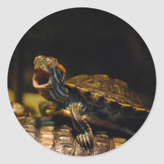 Yawning Baby Turtle Stickers
