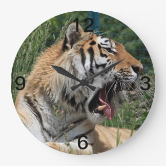yawning Bengal tiger Large Clock
