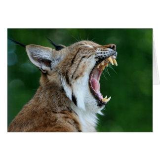 Yawning Bobcat Blank Card