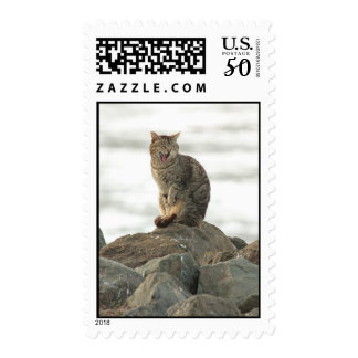 Yawning Cat on the Rocks Postage Stamps