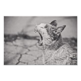 Yawning cat art photo