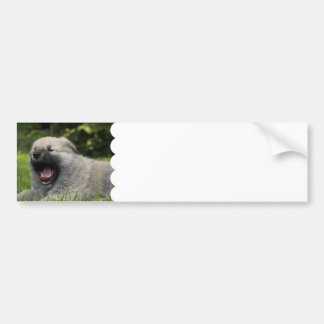 Yawning Chow Chow Bumper Stickers