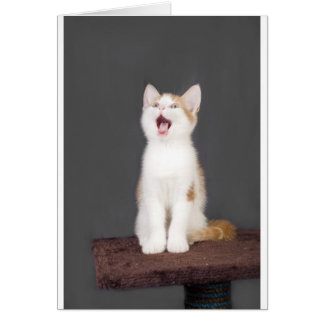 yawning kitten greeting card