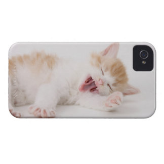 Yawning Kitten on White Background. iPhone 4 Case-Mate Cases
