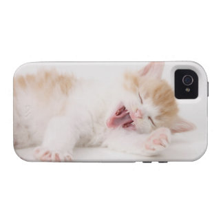 Yawning Kitten on White Background. Vibe iPhone 4 Covers