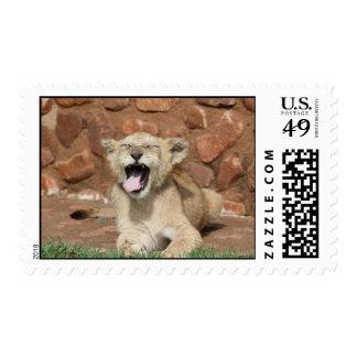 Yawning Lion Cub Postage