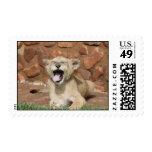 Yawning Lion Cub Stamps