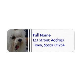 Yawning Maltese Return Address Label