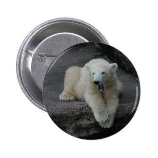 Yawning Polar bear cub Button