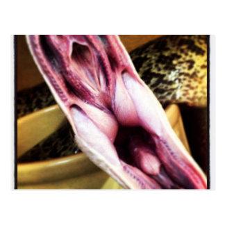 Yawning snake photo design postcard