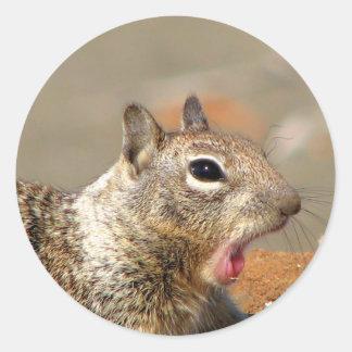 Yawning Squirrel Sticker