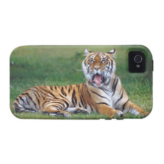 Yawning Tiger Vibe iPhone 4 Cases