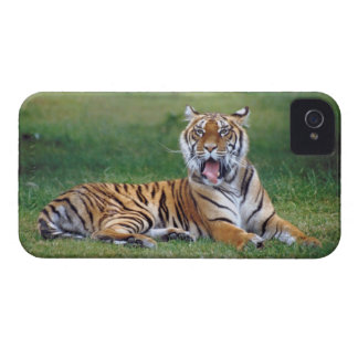 Yawning Tiger iPhone 4 Cases