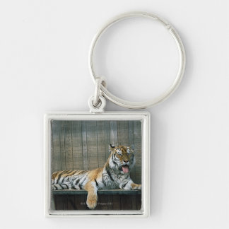 Yawning tiger in cage at zoo keychain